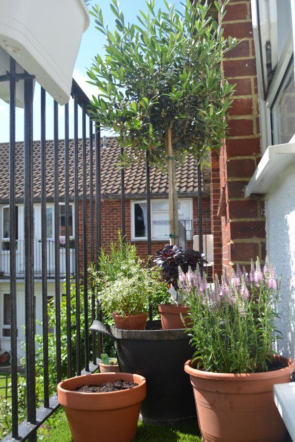 вид балкона сад