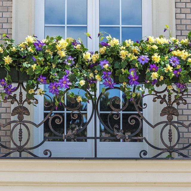 цветы для балкона петунии