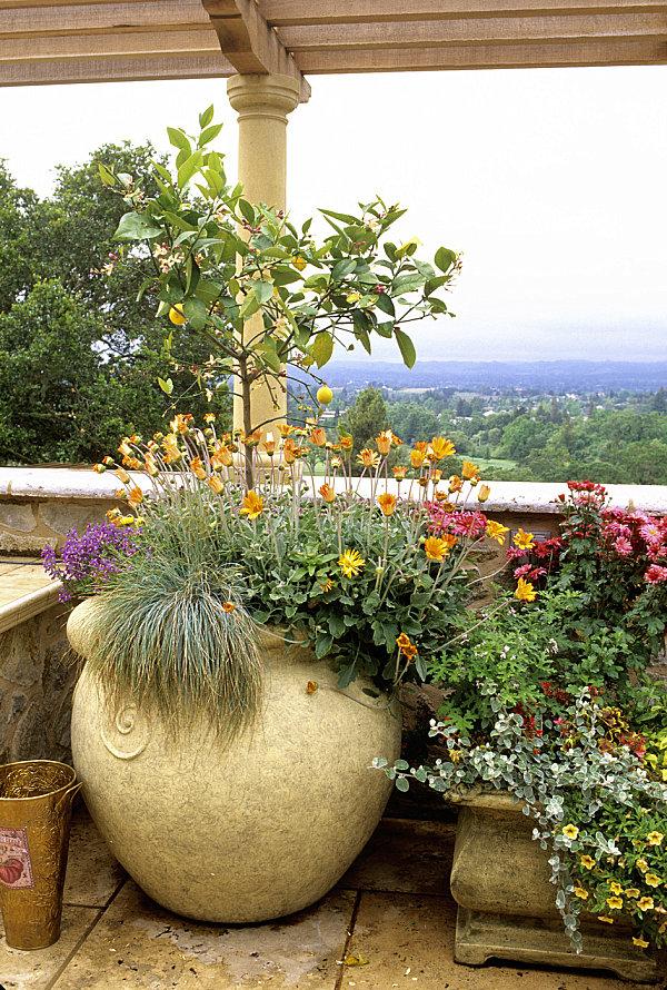сад на балконі фото