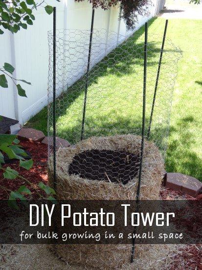 вирощування картоплі в соломі