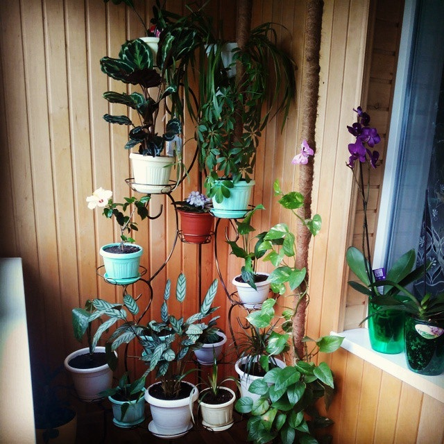 квіти на балконі фото