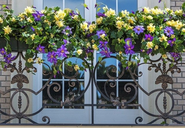 квіти для балкона петунії