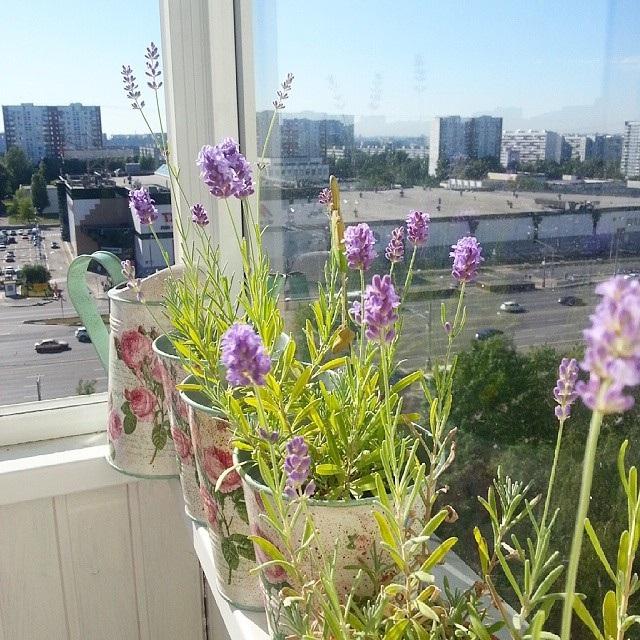 квіти на балконі герань