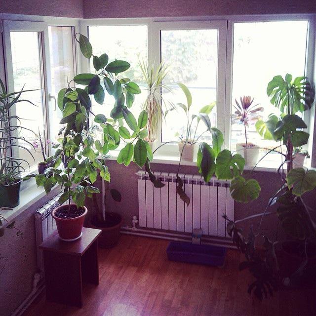 зимовий сад на балконі фото