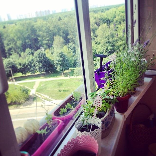 зимовий сад на балконі квартири фото