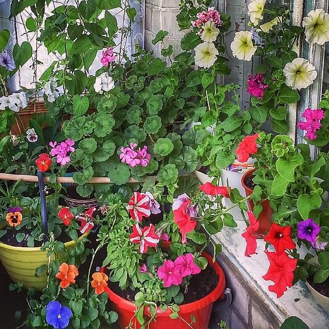 как создать зимний сад на балконе