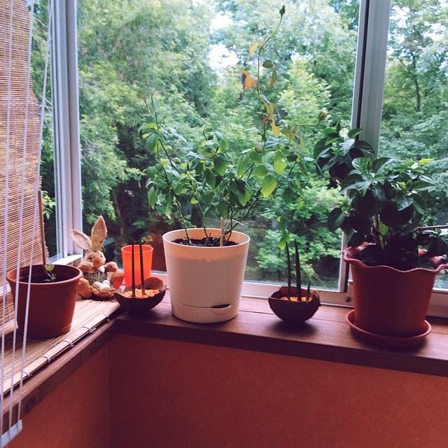зимний сад на балконе своими руками